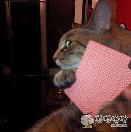 小婊砸,想偷看我的牌?