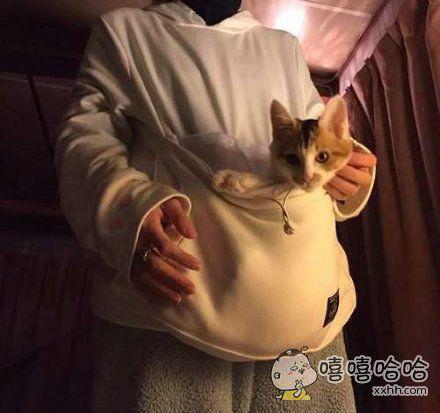 """今年冬天日本网友开始推崇一款非常实用的""""猫袋装"""",铲屎官们还不快入手一件"""