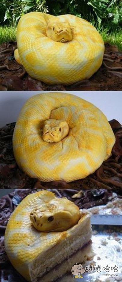 这是世界上最奇怪的蛇之一,接触到它不会受伤不会死亡,只是会发胖。。。