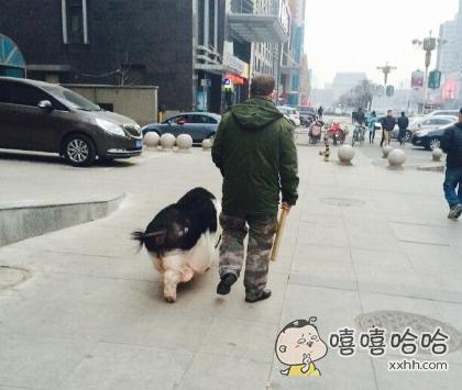 现在流行遛猪了吗?