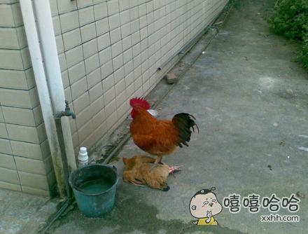趁人之危算什么公鸡中的战斗机。