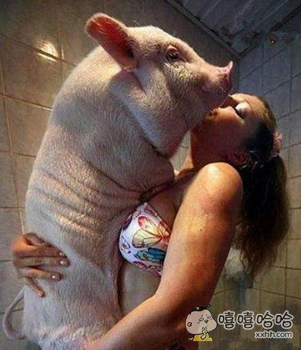 多少男人都没这猪有福气