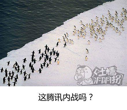 失散的两群企鹅在某海岸重新相聚