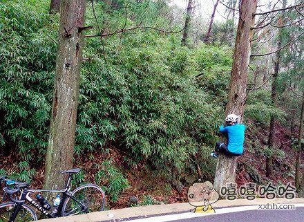 怎么骑着骑着就上树了