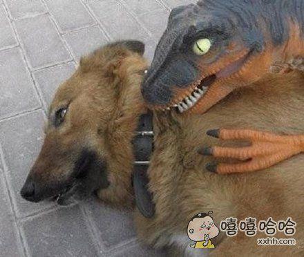 狗狗一脸生无可恋
