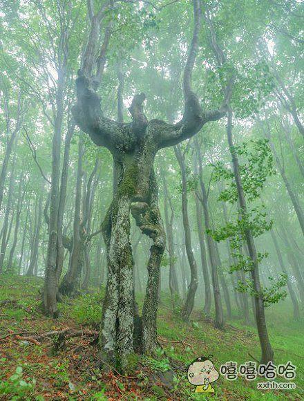 在树林里发现了一个恩特