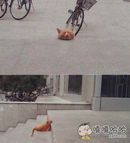 一网友今天从他家出来的时候被吓了一跳,因为看到他家台阶上有一颗喵星人的头颅。。。走远点一看才发现是一只野喵在那里睡觉。。。。。。。