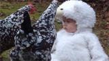 小北鼻跟小鸡的有爱互动