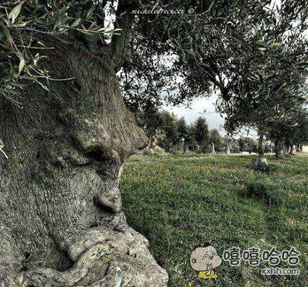 这是一棵在思考的树