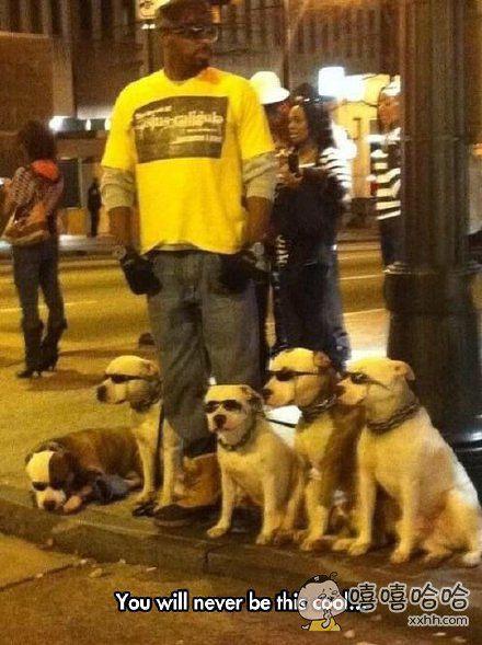 别人家的狗,简直太酷炫了。