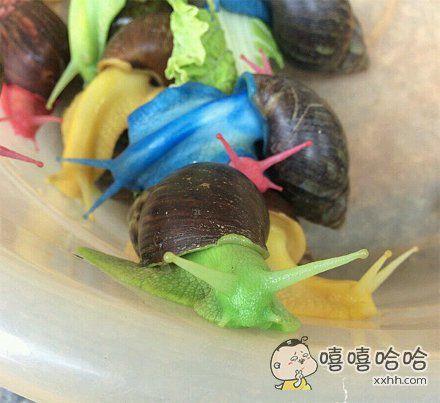 彩虹蜗牛,变种嫁接的魅力。