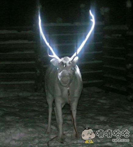 在芬兰,他们会在动物的角上用特殊颜料图上荧光色,为了防止丢失或开车的人看不见。。。