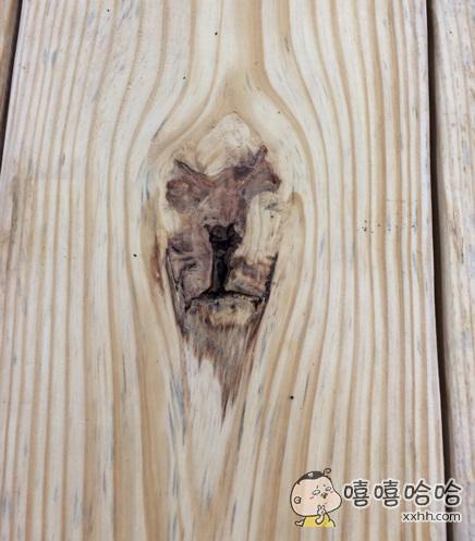 发现了一只被封印在树里的丛林之王