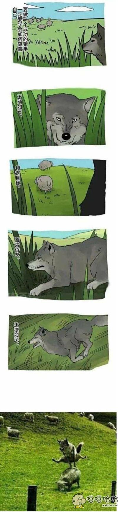 分享一只目标明确的狼