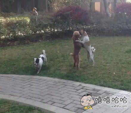 这样秀恩爱,让旁边的单身狗情何以堪。