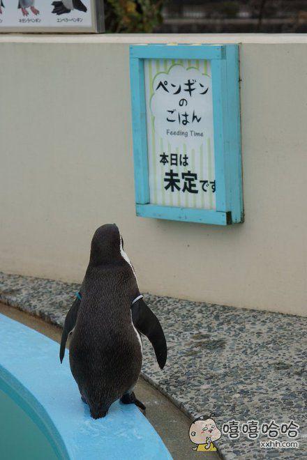 霓虹一家动物园的告示牌:企鹅投食时间→今日未定企鹅。。。