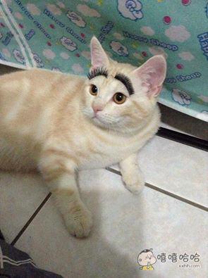 单身久了连猫看起来都眉清目秀的