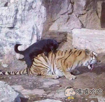 虎落平阳被犬欺