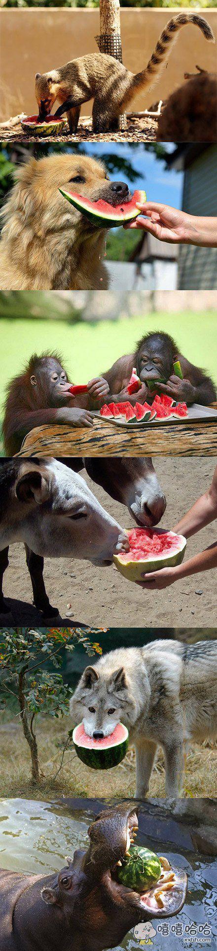 吃水果的时间到了