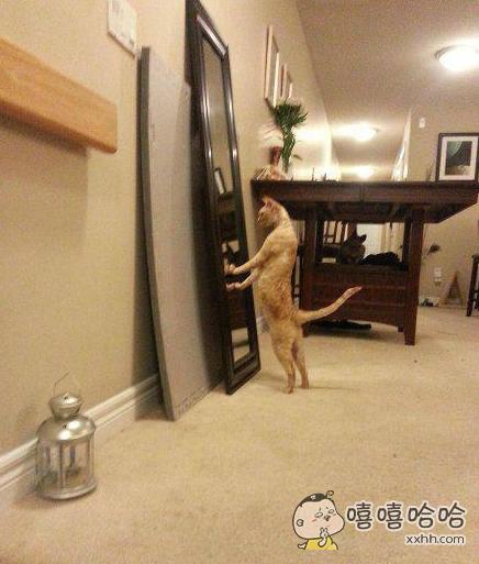卧槽!这么帅!