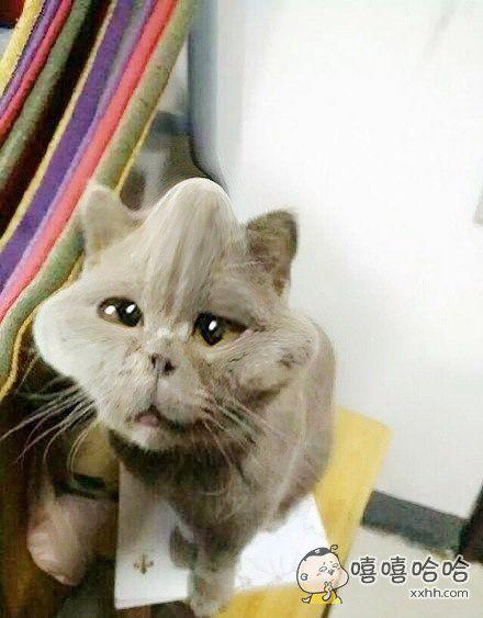 猫不要怪我。