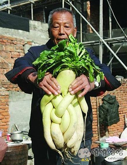 长的如此纠结的白萝卜!