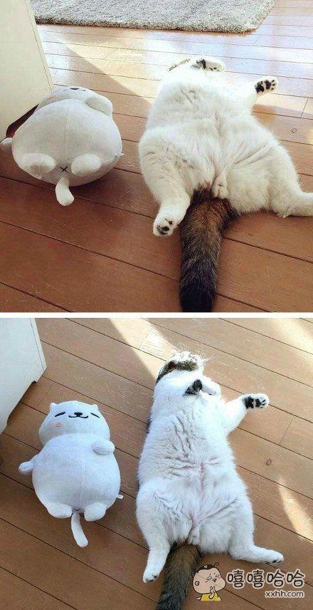 一网友早上起床发现自家的喵星人躺在玩偶旁边。。。睡姿真是完全一致