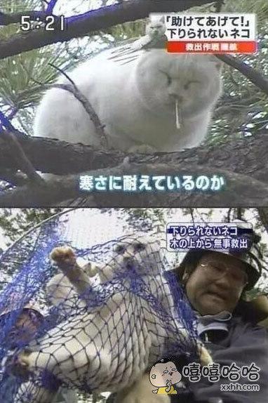 日本有一个流氓猫,因为坐在树上往行人头上擤鼻涕而被捕。。。