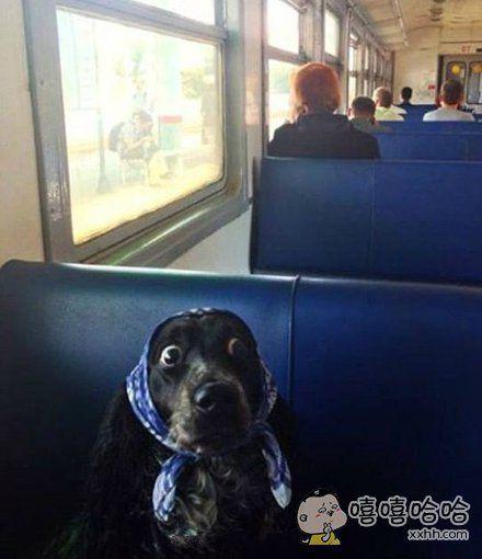 大婶,你哪站下车啊?