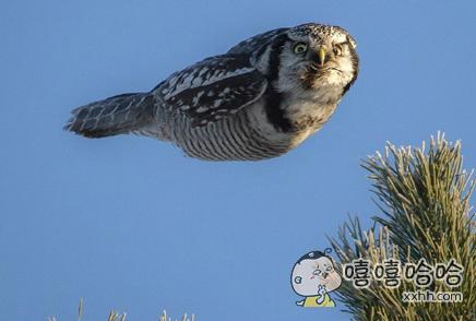 看什么看,没见过这么飞的鸟啊?