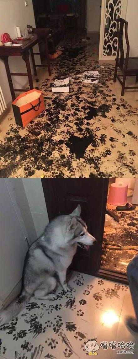 狗狗说:怪我咯!哈哈哈