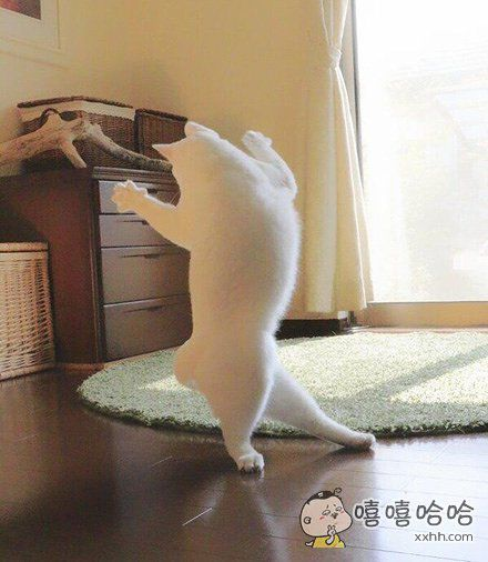 没有你的日子里,我会用跳舞麻痹自己