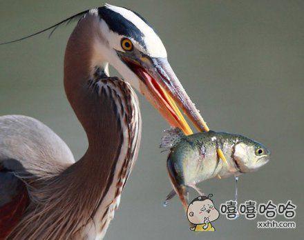 捕鱼高清图片
