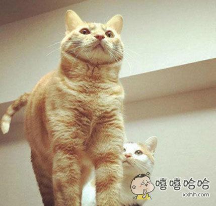 白猫内心os:哥,今夜你1米8。