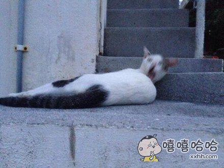还好这只猫自己不知道被拍成了什么样