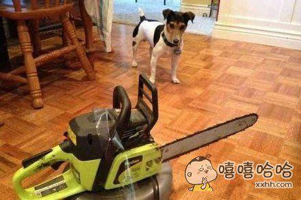 狗:我好像打不过它