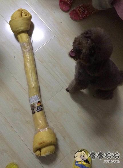 朋友给她家泰迪买的磨牙棒。。。此时它的心里是崩溃的