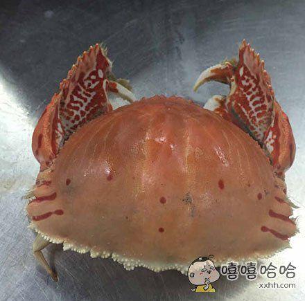 这是什么蟹啊,长得辣么像hello kitty