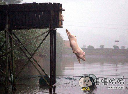兔子急了咬人,猪逼急了跳水~