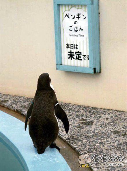 动物园贴了张告示:今日投食时间未定