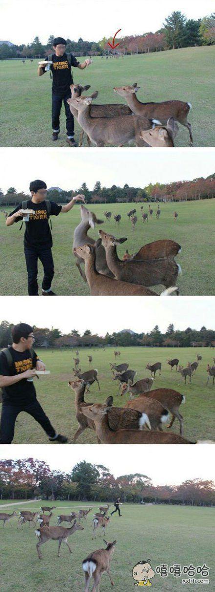 人家只想安安静静喂个鹿而已