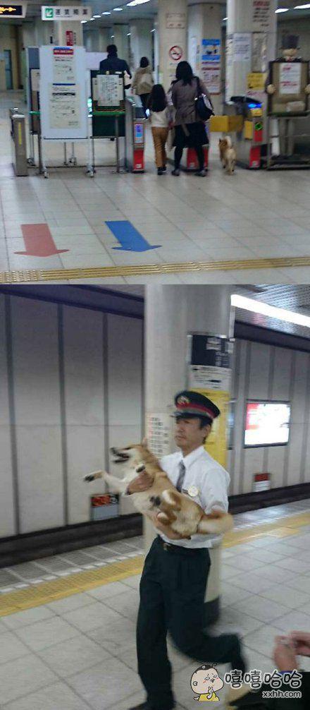 一名矮小的乘客凭借身高逃票混入站内,被站员当场捉拿……天网恢恢疏而不漏
