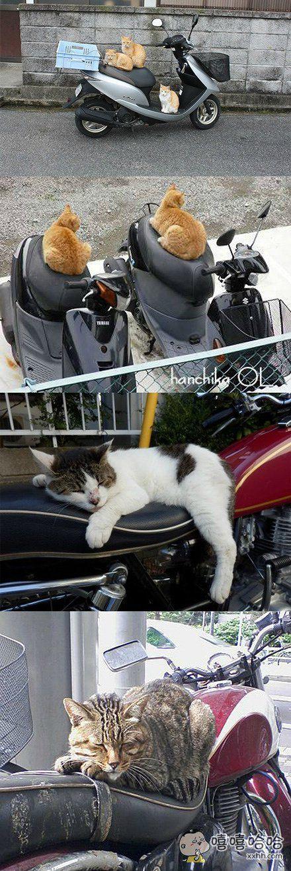 事实证明,摩托车放久了也会长出猫来