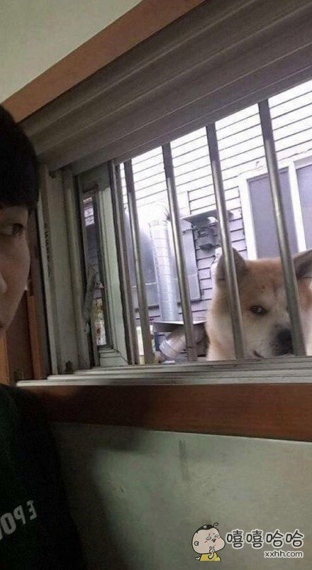 一位住在半地下室的网友说前院邻居家的狗天天偷看自己,非常有压力