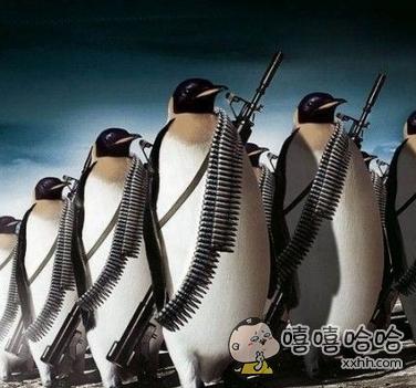 愤怒的企鹅!!!
