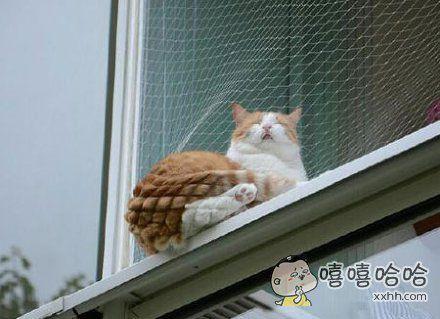 长毛的菠萝包