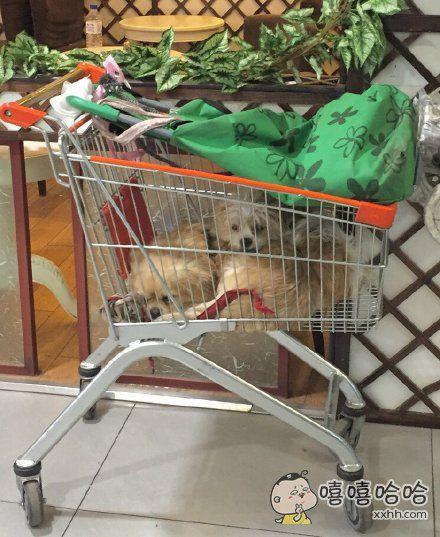 超市不让带宠物,于是。。。