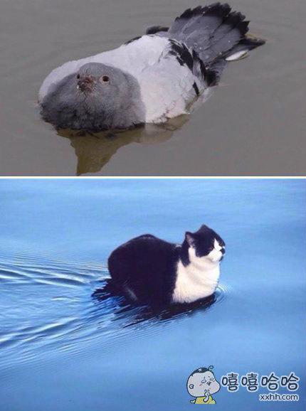 会游泳的喵一枚