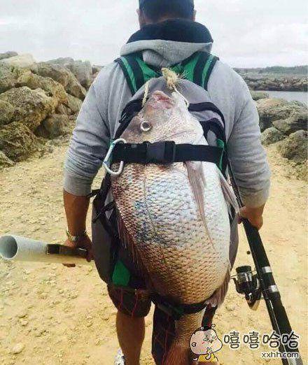 惨了,这么的鱼怎么吃才好