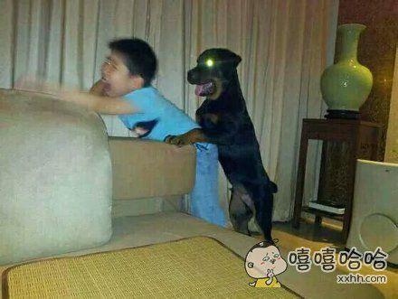 啊,妈妈,咱家的狗要干嘛啊!